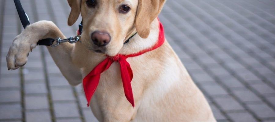 beste Tierhalter Haftpflicht versicherung finden
